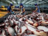 Xuất khẩu cá tra sang các thị trường lớn tăng mạnh