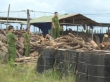 Đắk Lắk: Bãi tập kết gỗ không rõ nguồn gốc 'nấp' trong lò than