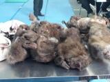 Bắt đối tượng vận chuyển động vật hoang dã tại Nghệ An