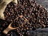 Tìm lời giải cho phát triển bền vững cà phê Việt