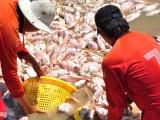Đồng Nai: Người dân La Ngà nhận 12,3 tỷ đồng sau vụ cá chết trắng bè