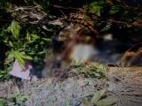 Kon Tum: Phát hiện thi thể người đàn ông đang phân hủy trong rẫy cao su