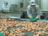 Xuất khẩu tôm sang Hàn Quốc dự báo đạt nửa tỷ đôla Mỹ năm 2019