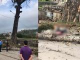 Hà Giang: Nam thanh niên thiệt mạng vì bị cành cây rơi trúng