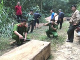 Đắk Lắk: Phát hiện một bãi tập kết gần 15m3 gỗ lậu