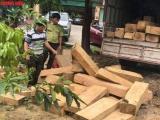 Thừa Thiên-Huế: Bắt giữ xe ô tô chở hàng chục phách gỗ lậu ra Bắc tiêu thụ