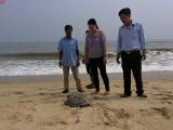 Thừa Thiên - Huế: Thả cá thể rùa quý hiếm về tự nhiên