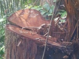 Bắt giam Trưởng ban quản lý rừng phòng hộ La Ngà