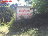 Thanh Hóa: Đối tượng khai thác gỗ rừng đặc dụng, chống đối lực lượng chức năng