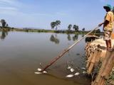 Quảng Nam: Cá chết trắng sông do nước nhiễm mặn