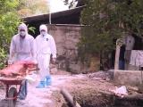 Bùng phát ổ dịch tả lợn châu Phi thứ 3 ở Hậu Giang