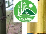 Sản phẩm thứ hai của Cao Bằng được cấp chứng nhận đăng kí chỉ dẫn địa lý