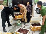 Lạng Sơn: Bắt giữ gần 50 kg tôm hùm đất nhập lậu từ Trung Quốc