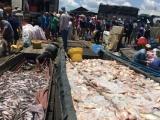 1.000 tấn cá chết trên sông La Ngà: Đào sâu 3m tìm đường ống xả thải ra sông