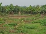 Hưng Yên: Kẻ gian chặt phá 3 sào cây ăn quả của người dân trong đêm