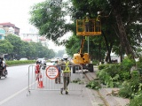 Hà Nội cắt tỉa gần 40.000 cây xanh trước mùa mưa bão