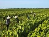 Hải Phòng: Xã Tam Đa, Vĩnh Bảo xuất sắc trong công cuộc đổi mới