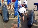 Xác cá voi nặng gần một tấn dạt vào bờ biển Hà Tĩnh