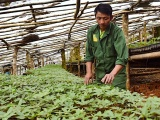 Thanh tra Chính phủ yêu cầu Bộ KH&CN kiểm điểm đối với dự án Sâm Ngọc Linh