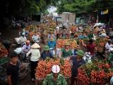 Giá vải thiều cao kỷ lục, Bắc Giang thu gần 6.400 tỷ đồng