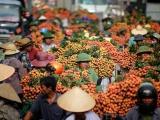 Phá kỷ lục 60 năm, Bắc Giang thu hơn 6.000 tỷ đồng từ quả vải
