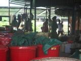 Bắc Kạn: Phát hiện 2 cơ sở sản xuất rượu thủ công trốn thuế
