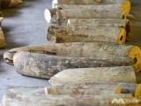Singapore cấm hoàn toàn buôn bán ngà voi từ năm 2021