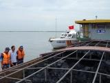 Cảnh sát biển tạm giữ 700 m3 than bùn không rõ nguồn gốc