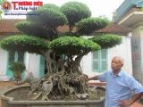 """Mục sở thị những """"siêu cây"""" tiền tỷ của một nghệ nhân Hà thành"""