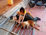 Thanh Hóa: Tạm giữ 17 nghi phạm trong ổ nhóm trộm hàng trăm tấn chó