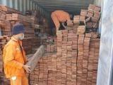Hải Phòng: Bắt giữ 3 container gỗ quý nhập khẩu trái phép