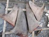Hải Phòng: Phát hiện số lượng lớn vây cá mập tại cảng Lạch Huyện