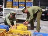 Hải Dương: Bắt giữ, tiêu hủy 4.000 con gà giống nhập lậu