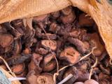 Quảng Ninh: Thu giữ 20 tấn nguyên dược liệu nhập lậu