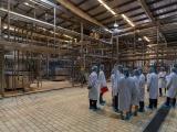 Chương trình Sữa học đường TPHCM bắt đầu vào nhịp chỉ sau 2 tuần triển khai