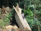 Đắk Lắk: Tạm giữ 7 nghi can phá rừng vùng lõi khu Bảo tồn thiên nhiên Nam Kar