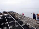 Hải Phòng: Tạm giữ 800 tấn than không rõ nguồn gốc