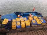 Quảng Ninh: Thu giữ 3.200 con vịt giống nhập lậu