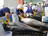 Năm 2020, xuất khẩu cá ngừ dự kiến chỉ tăng 15%