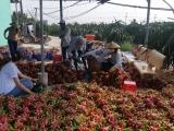 Virut Corona đẩy ngành nông nghiệp vào tình thế khó khăn chồng khó khăn