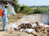 Thanh Hóa: Dịch cúm gia cầm tái phát ở 2 huyện