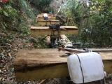 Kon Tum: Bắt quả tang 13 đối tượng phá rừng