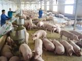Nhập khẩu thịt lợn từ Nga để bổ sung nguồn cung cho thị trường