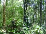 Ban quản lý Vườn Quốc gia Chư Mom Ray: Nỗ lực trong công tác bảo vệ và phát triển rừng