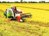 EVFTA – Tạo động lực cho nông nghiệp Việt Nam