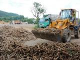Xuất khẩu sắn Việt Nam tăng mạnh về cả lượng và giá trị