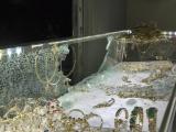 TPHCM: Người dân vây bắt đối tượng cướp tiệm vàng