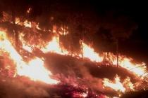 Lâm Đồng: Ngọn lửa bùng phát trên núi Đại Bình, hơn 3ha rừng thông bị cháy