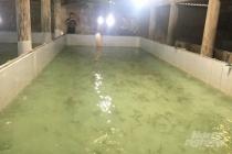 Phú Yên: Tiêu hủy số lượng cực lớn tôm giống không rõ nguồn gốc