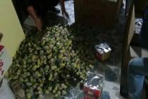 Ninh Bình: Bắt giữ, xử lý 28 người tàng trữ, đốt pháo đêm giao thừa
